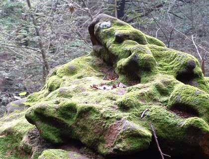 photo of a rock covered in moss