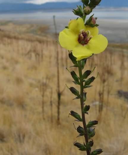 Antelope Island State Park - Great Salt Lake