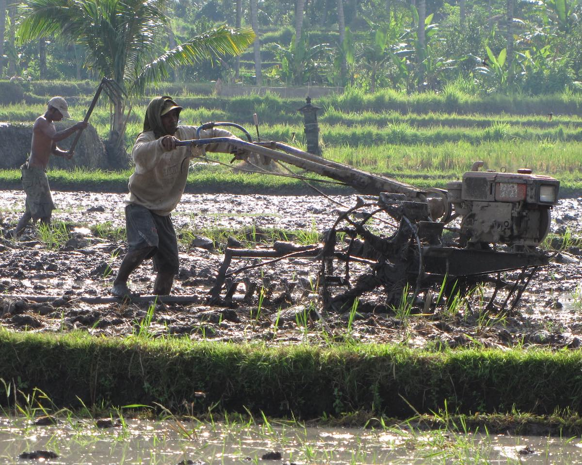 farmers tilling a rice field with a machete and a tractor